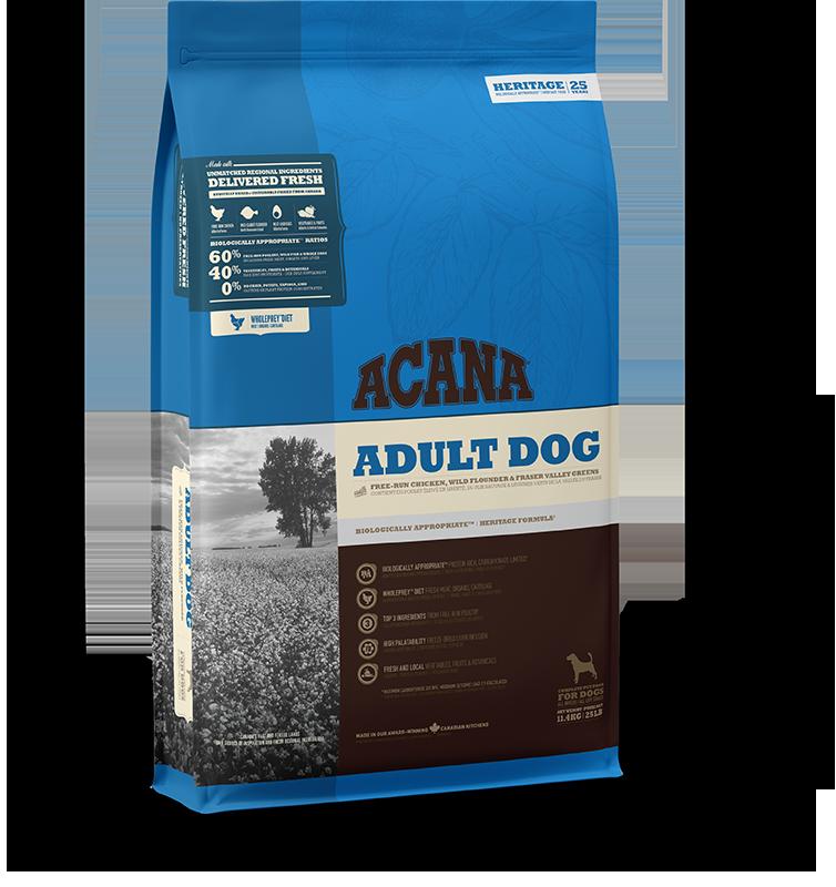 Adult Dog